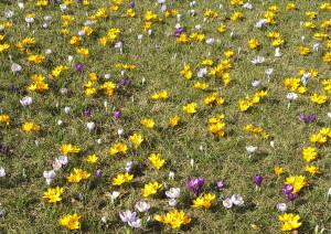 wiosna w A.z PP.1